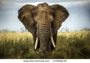 stock-photo-background-elephant-133689230