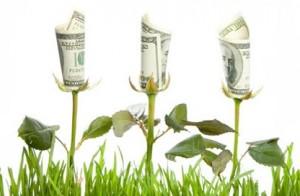 money-flowers